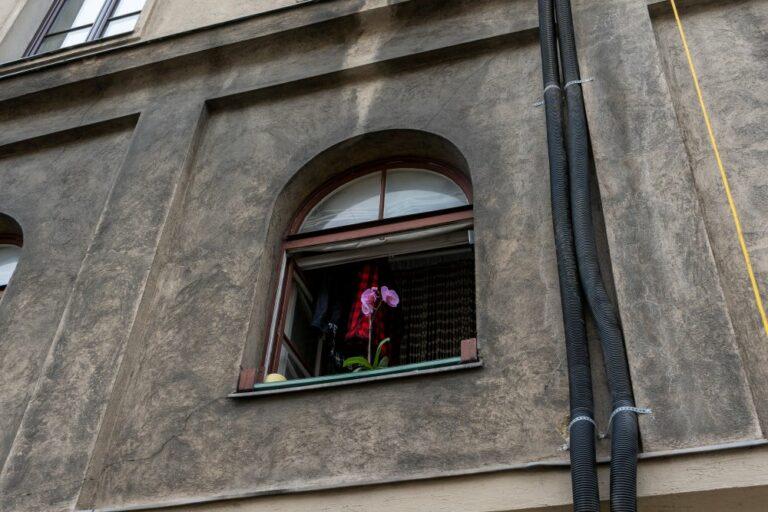Orchidee im Fenster eines Abbruchhauses, Radetzkystraße, Wien, Landstraße