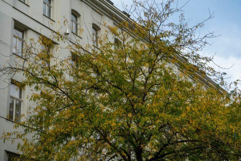 Baum und Leiner-Haus, Mariahilfer Straße, Wien, 7. Bezirk