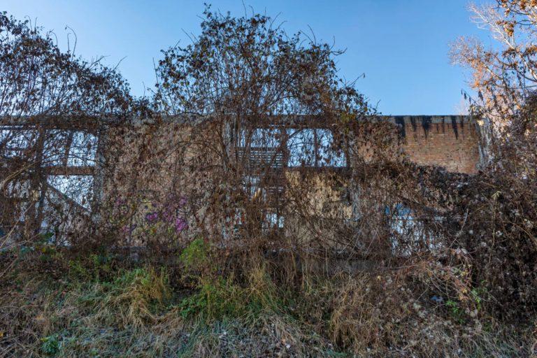 abgerissene Nordbahnhalle, Sträucher