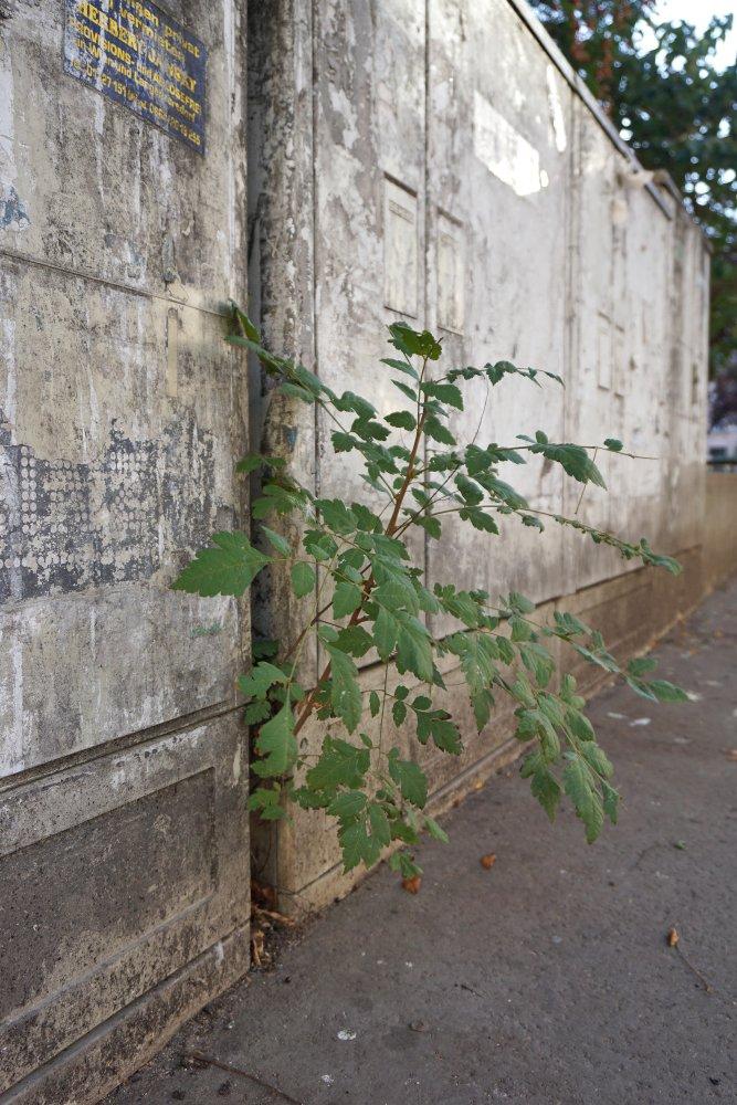 Schaltkästen und Pflanze in der Juchgasse, Wien-Landstraße