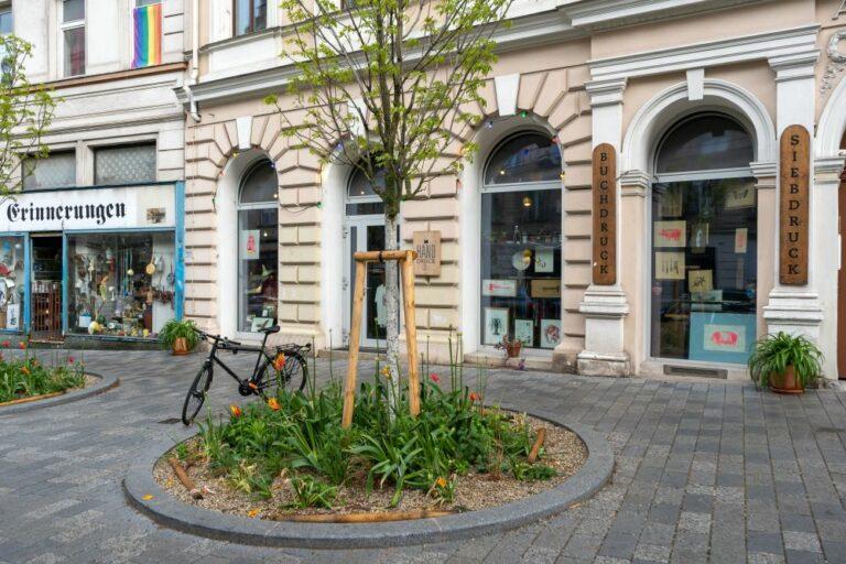Baum am Ruth-Klüger-Platz in Wien-Neubau