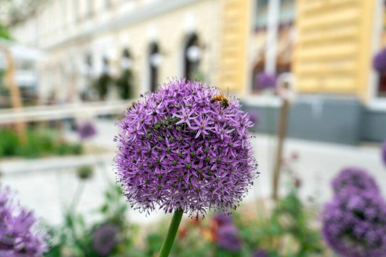 Blume, Biene, Ruth-Klüger-Platz, 1070 Wien