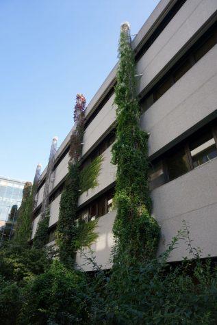 Fassadenbegrünung am Wiener AKH
