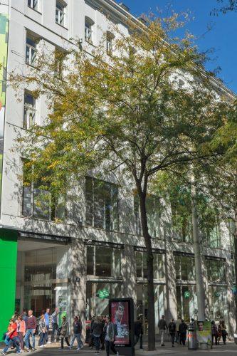 """Leiner, Mariahilfer Straße, ehemaliges Warenhaus """"Zur großen Fabrik"""" von Stefan Esders, Wien-Neubau"""